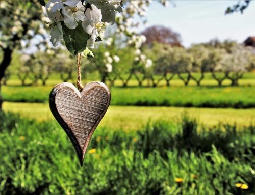 A spasso tra i fiori… con la frutta fresca